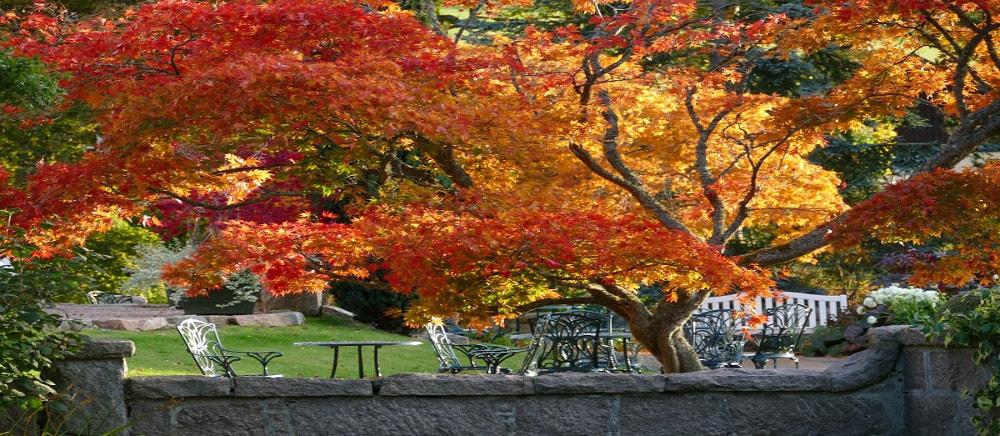 autumn gardens douneside